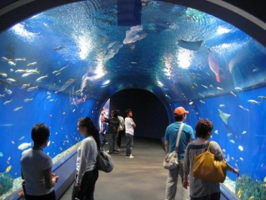 аквариум «Красное море»