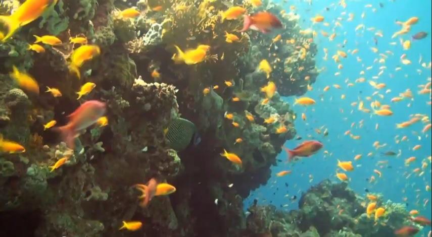 Отели Шарм-эль-Шейха с коралловыми рифами