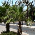 пальмы в шарм-эль-шейхе